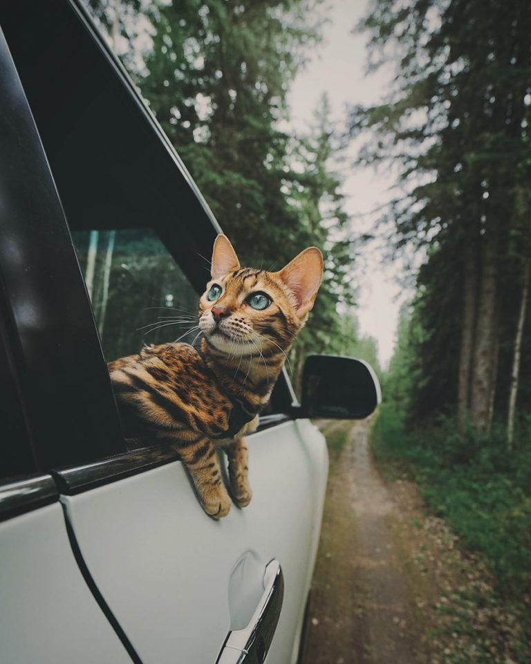 Conheça Suki... a Gatinha Que Adora Viajar Pela Montanha! 7