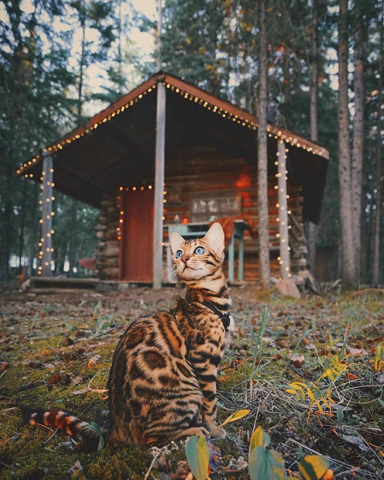 Conheça Suki... a Gatinha Que Adora Viajar Pela Montanha! 9
