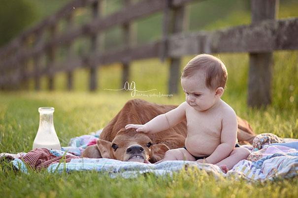 Algumas Imagens Que Provam Que Vaquinhas São Como Cães Em Tamanho Grande 21
