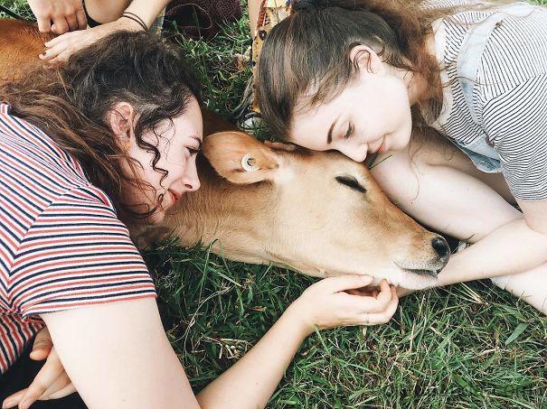Algumas Imagens Que Provam Que Vaquinhas São Como Cães Em Tamanho Grande 24