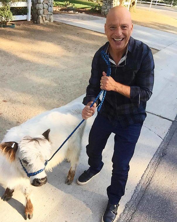 Algumas Imagens Que Provam Que Vaquinhas São Como Cães Em Tamanho Grande 28