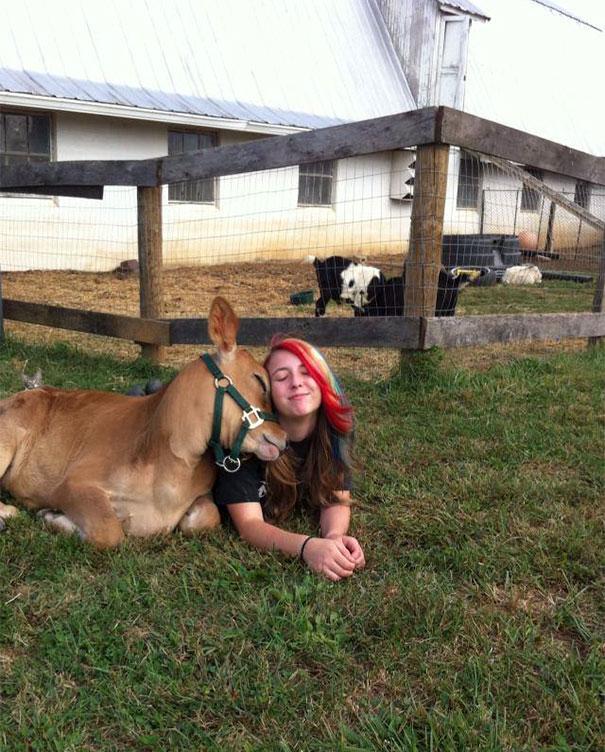 Algumas Imagens Que Provam Que Vaquinhas São Como Cães Em Tamanho Grande 3