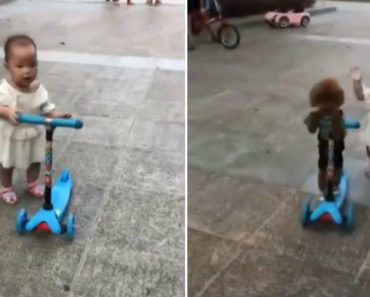 Pequeno Cachorrinho 'rouba' Trotinete a Criança 3