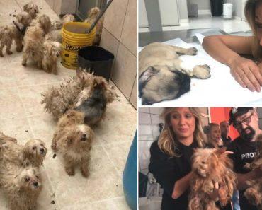 Atriz Luisa Mell Resgata 135 Cães De Um Canil De Criadores e Ficou Em Estado De Choque Com o Que Viu 19