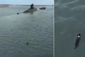 """""""Comando"""" o Cão De Uma Tripulante Do Submarino Desaparecido Na Argentina Atira-se à Água Para Despedir-se 10"""