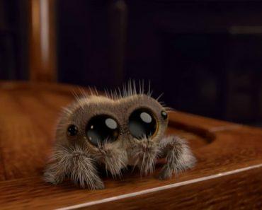 """Lucas, a """"Aranha"""" Mais Adorável De Sempre Está a Derreter a Internet 7"""
