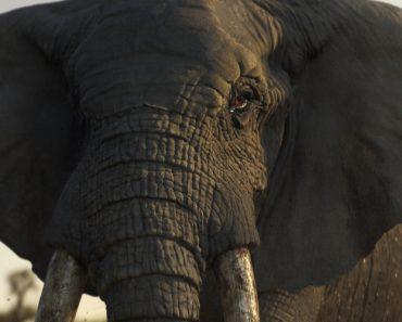 Elefante é Protagonista Do Anúncio Mais Triste Deste Natal 2