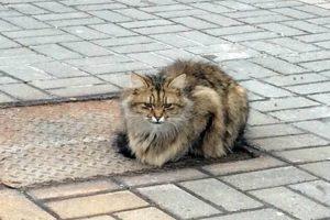 Gato Abandonado Espera Por Donos No Mesmo Sítio Há 1 Ano 10