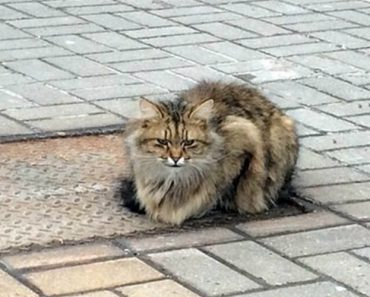 Gato Abandonado Espera Por Donos No Mesmo Sítio Há 1 Ano 4