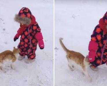 Gato Faz o Mais Adorável Ataque a Bebé 5