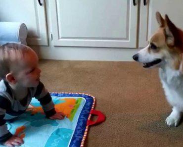 Cão Tenta Chamar Bebé Para Brincar Com Ele 4