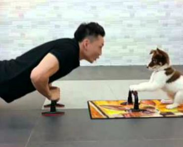 Cachorrinho Faz Flexões Com o Seu Dono e é Adorável 2