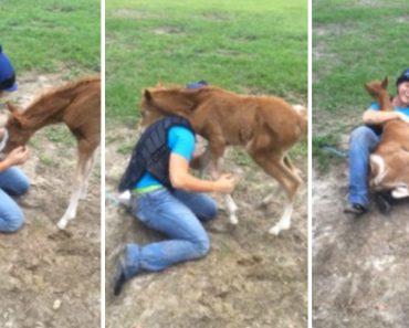 Jovem e Cavalo Bebé Criam Incrível Ligação Ao Conhecerem-se Pela 1ª Vez 6