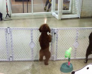 Cachorrinho Dança De Emoção Ao Ver o Seu Dono 5