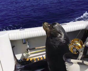 Leão-Marinho Salta Para Dentro De Um Barco De Pesca Em Andamento Para Garantir Almoço 9