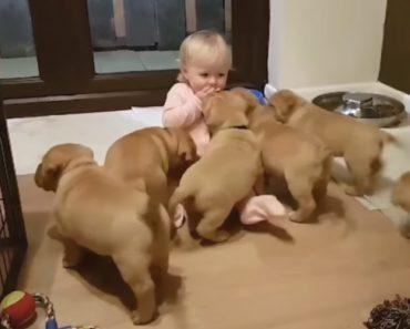 Bebé Desaparece Com Adorável Ataque Canino 8