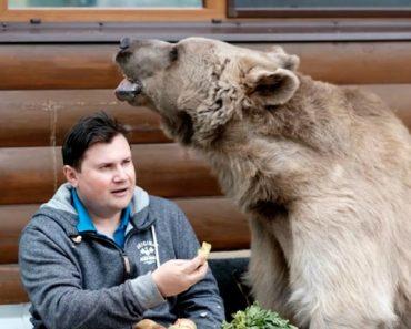 Família Russa Vive Com Um Urso Dentro De Casa e Tratam-no Como Animal De Estimação 1