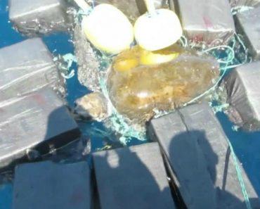 Tartaruga é Resgatada No Mar Após Ser Encontrada Presa a 44 Milhões De Euros Em Cocaína 7