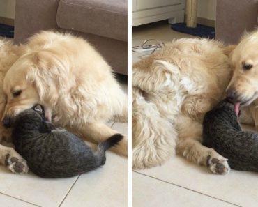 """Cão Pede Desculpa Depois De Tentar """"Comer"""" o Gato 4"""