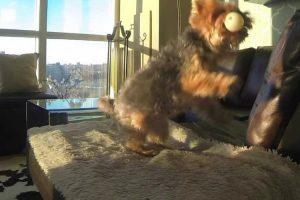 Cão Esforça-se Para Apanhar Uma Bola... Mas Estava Bastante Difícil 10