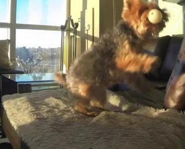 Cão Esforça-se Para Apanhar Uma Bola... Mas Estava Bastante Difícil 4
