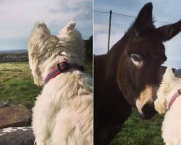 O Emocionante Encontro Entre Um Cão e Um Burro Após Estarem 1 Ano Separados 7