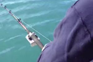 Este Pescador Vai Ter Uma Bela História Para Contar Aos Amigos 10