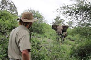 Homem Enfrenta Elefante Que o Tentava Atacar 9