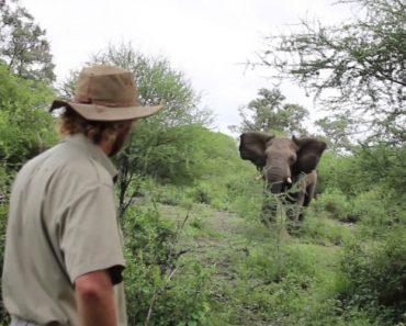 Homem Enfrenta Elefante Que o Tentava Atacar 1