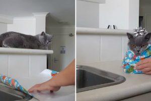 Como Embrulhar Um Gato Para Oferecer De Presente 10
