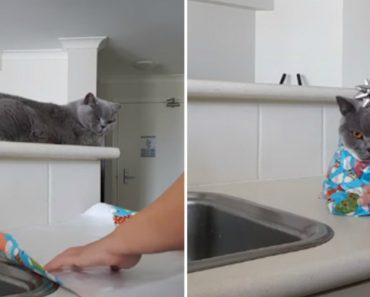 Como Embrulhar Um Gato Para Oferecer De Presente 5