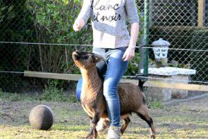 Jovem Consegue Ensinar Incríveis Truques a Uma Galinha e Duas Cabras 10