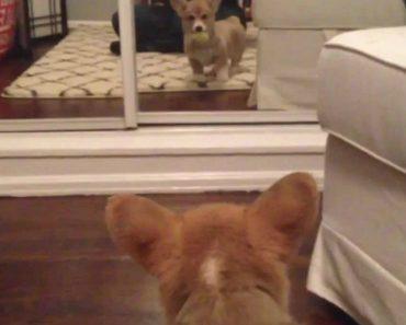 A Reação De Uma Cadela Quando Se Vê Pela Primeira Vez Ao Espelho 9