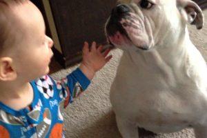 Bebé e Cão Partilham Refeição Da Maneira Mais Estranha Possível 10