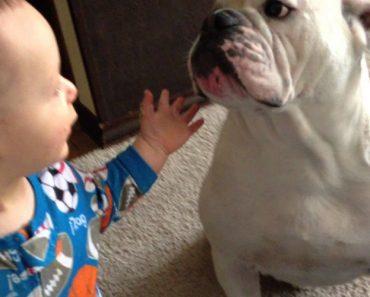 Bebé e Cão Partilham Refeição Da Maneira Mais Estranha Possível 4