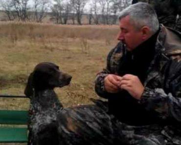 Os Cães De Caçadores Na Rússia São Especiais, Veja o Que Eles Conseguem Caçar 5