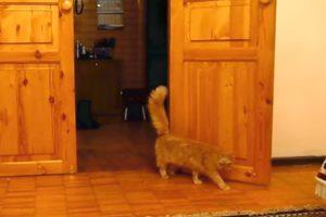 Gato Assusta-se Sempre Que Ouve o Som Do Jogo Super Mario 10