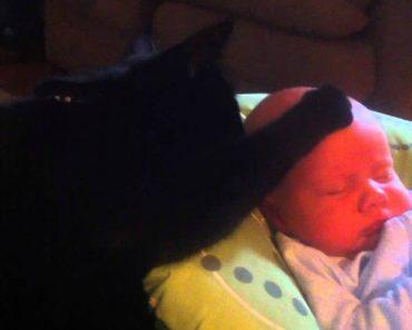 Adorável Gato Acalma e Faz Adormecer Bebé 3