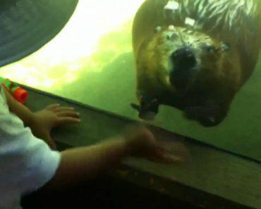 Castor Diz Adeus a Uma Criança Que Foi Fazer Visita Ao Zoo 8