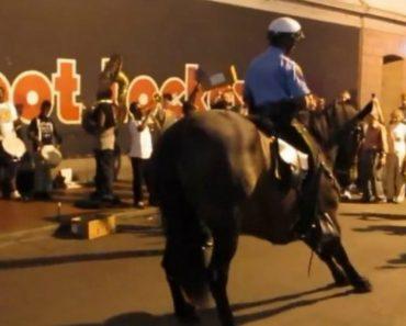 Polícia e Cavalo Proporcionam Fantástico Momento De Dança Ao Som De Música De Rua 7