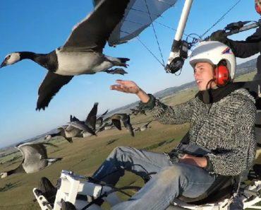 Praticante De Paramotor Capta Fantástico Vídeo Enquanto Voa Na Companhia De Vários Pássaros 8