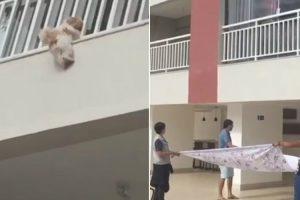 Moradores Abrem Lençol e Salvam Cadela Que Caiu Da Janela De Um 4º andar 9
