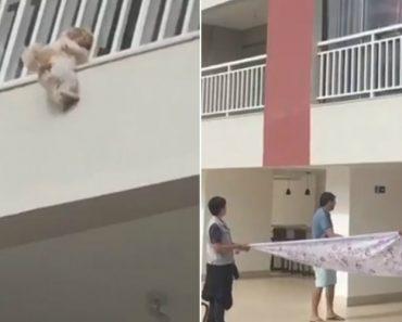 Moradores Abrem Lençol e Salvam Cadela Que Caiu Da Janela De Um 4º andar 4