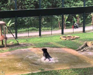 Vídeo Capta a Felicidade De Um Urso No Primeiro Dia De Liberdade, Após Anos Trancado Numa Jaula 5