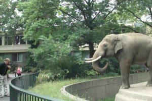 Elefante Tem Maneira Original De Demonstrar Que Não Gosta De Fotografias 10
