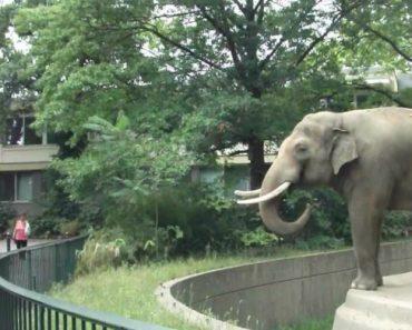 Elefante Tem Maneira Original De Demonstrar Que Não Gosta De Fotografias 5