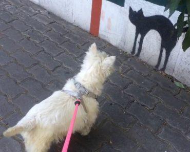 Cão Fica Profundamente Confuso Com o Desenho De Um Gato Num Muro 1