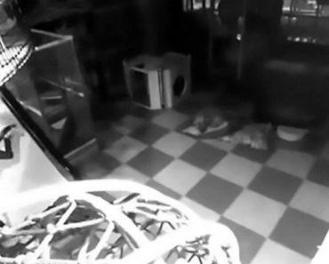 Pai e Filho Escondem-se No Interior De Centro Comercial Para Brincarem Durante a Noite 6
