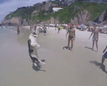 Cão Faz Sucesso a Jogar à Bola Nas Praias Do Rio de Janeiro 7