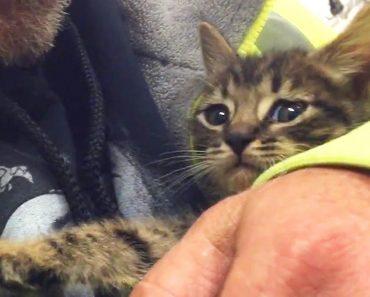 O Salvamento De Um Gatinho Após Passar 33 Horas Preso No Esgoto 6